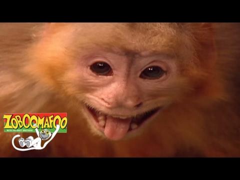 🐒 Zoboomafoo 115 - Fling | HD | Full Episode 🐒 - PakVim