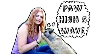 How To Train 'paw' And 'high 5'
