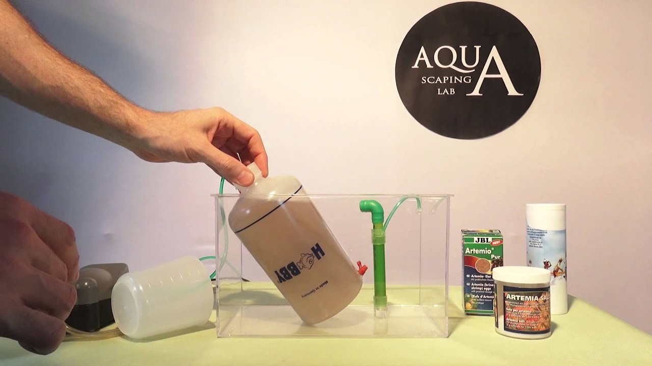 Aquascaping Lab How To Hatch And Breed Brine Shrimp Home Made Or Artemia Instant Kit Set Allevare Artemie Saline