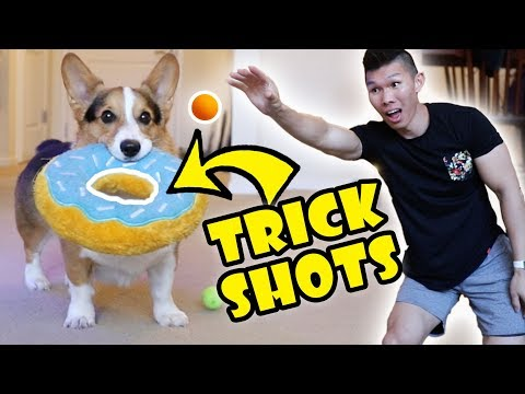 Trick Shots with My CORGI Dog || Life After College: Ep. 594