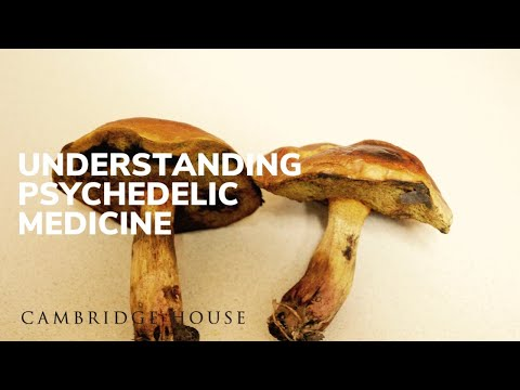 The Psychedelic Renaissance Panel At The Extraordinary Future Conference, September 2019