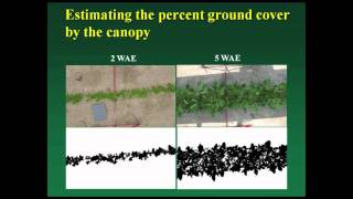 Organic Weed Management in Organic Grain Cropping Systems