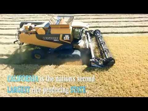 California Harvest - Richvale Rice