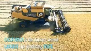 California Harvest - Richvale Rice