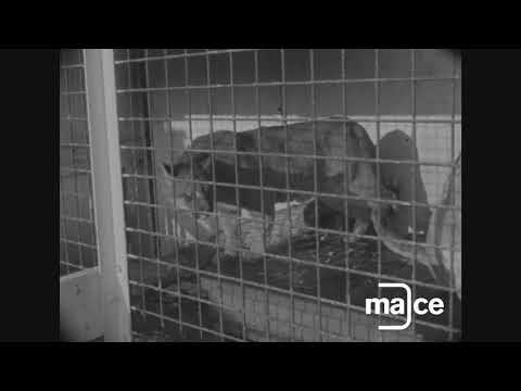 The Beeston Zoo