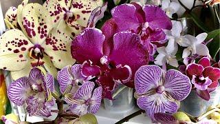 если КОРНИ ОРХИДЕИ НЕ видны пересадка цветущей орхидеи для ЛЕНИВОГО ухода