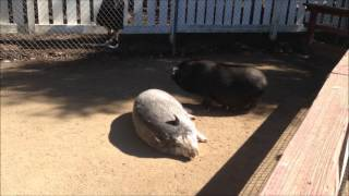 Видео для детей. Животные на ферме.