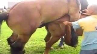 Конь и собака в номинации: у кого больше?
