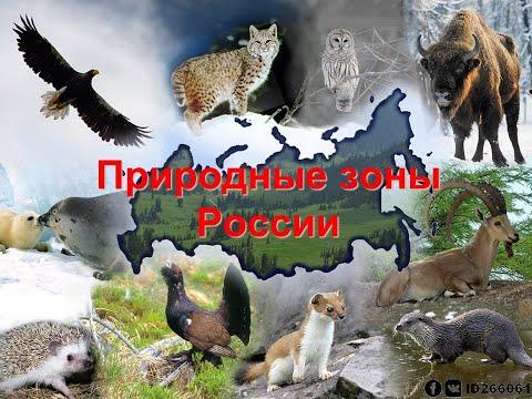 8 класс - Природные зоны России