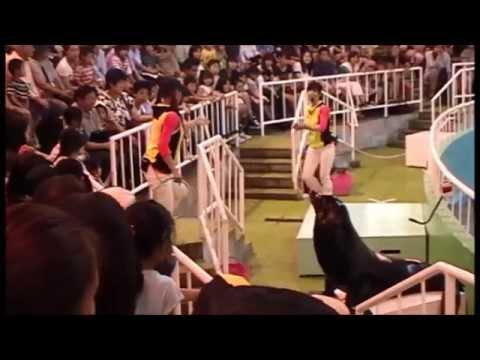 "Seelöwenshow / Sea Lion Show ""Yomiuri Land"" in Tokyo (Japan) / 25.05.2014"