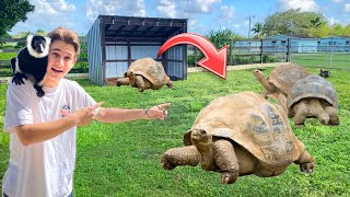 BRINGING THE WORLDS LARGEST TORTOISES TO MY ZOO !