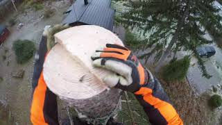Two Spurce take down with Stihl ms200