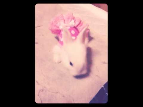 กระต่ายแคระ*-*น่ารักไหม