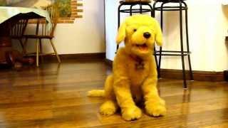 Интерактивная собака по имени Бисквит