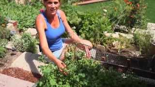 Tips for Growing Lettuce in the Summer