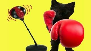 Мы Купили Игрушки Для Котенка Котенок-Боксер Обзор игрушек Приколы