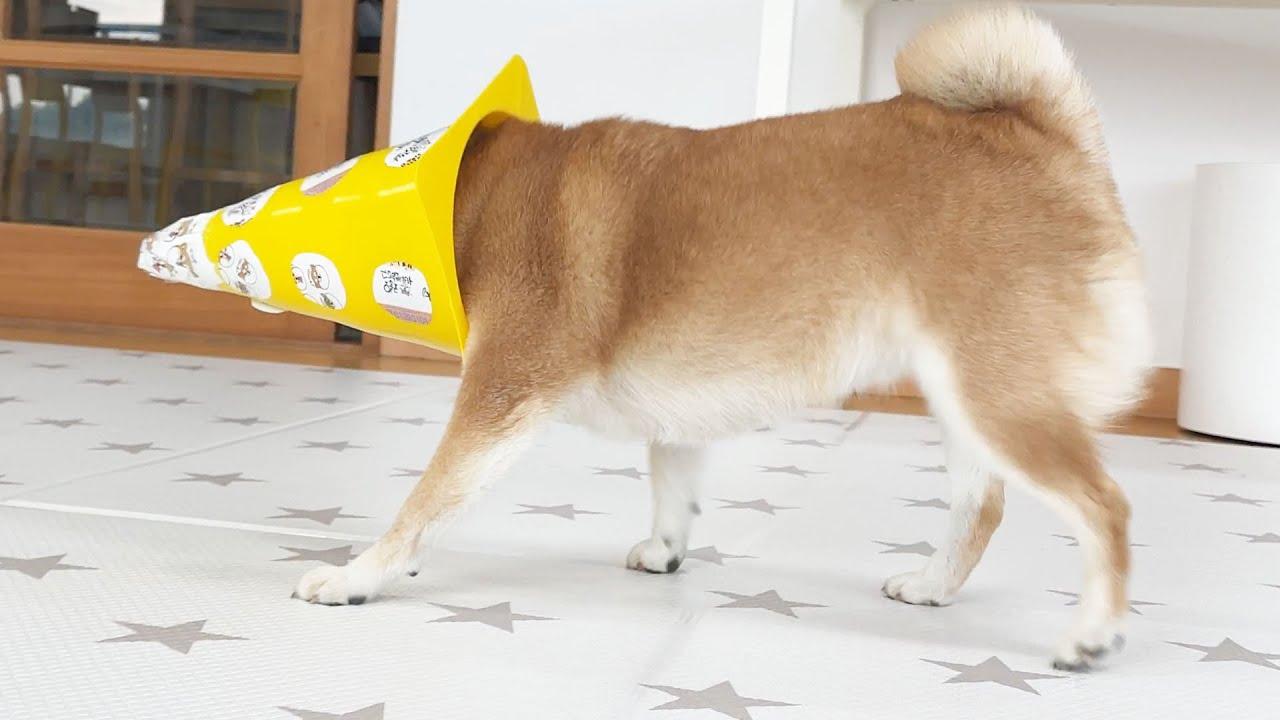정말 엉뚱한 강아지 ㅋㅋㅋ