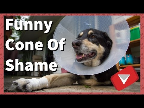 Funny Cone Of Shame Compilation [Cute] (TOP 10 VIDEOS)