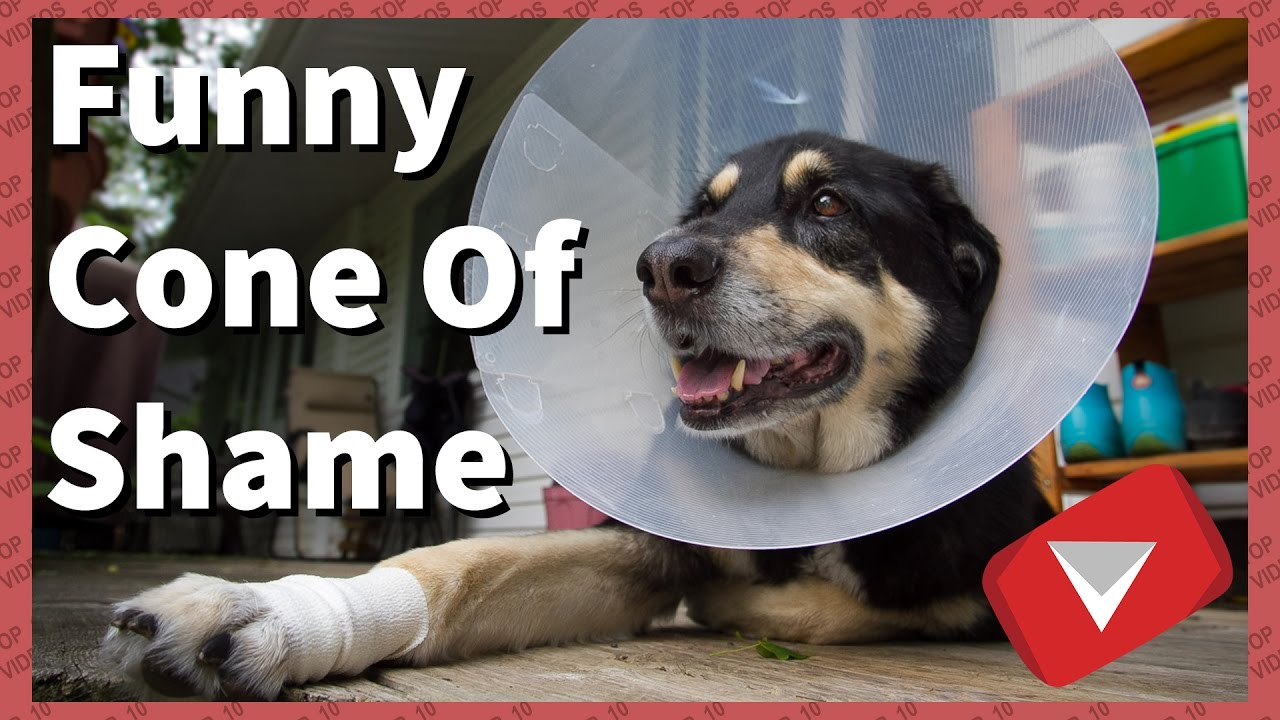 funny cone of shame compilation cute top 10 videos youtube