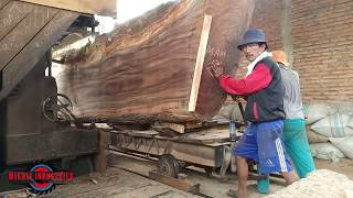 SAWING GIANT WOOD IN THE SAWMILL