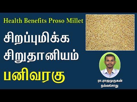 சிறப்புமிக்க சிறுதானியம் பனிவரகு   Health benefits of Proso Millet (Pani Varagu)