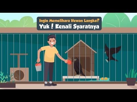 Ingin Memelihara Hewan Langka Yuk Kenali Syaratnya Indonesia Baik