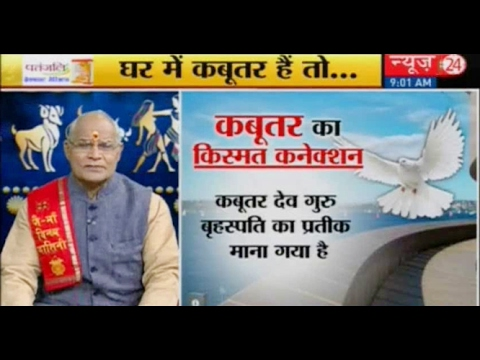 Kaalchakra II  Astrologer || Is a pigeon nest good luck? ||