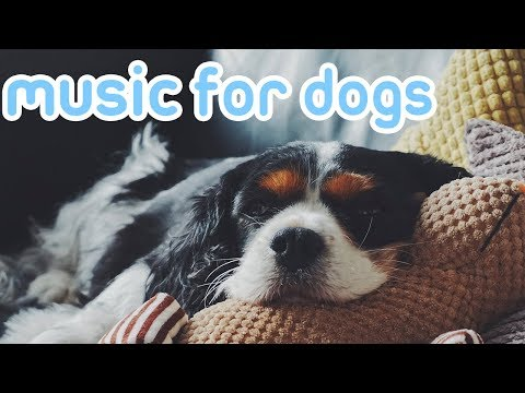 Music to Calm My Dog! Deep Sleep Relaxation Music for Dogs and Puppies!