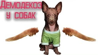 видео демодекоз у собак виды клещей