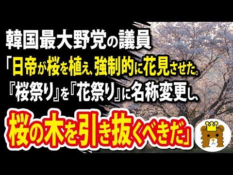 2021/03/24 韓国最大野党の議員「日帝は桜を植え、強制的に花見をさせた。『桜祭り』を『花祭り』に名称変更し、桜の木を引き抜くべきだ」