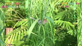 붉은오목눈새와 소리_자연은 아릅답습니다_SW자연다큐 T…
