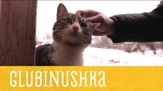 Глубинушка  День 1  Гусли | Иностранец в России | Моя Планета