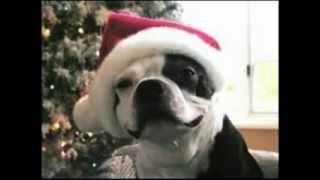 Jingle Bells - Barking Dogs