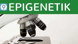 Epigenetik - Was wird eigentlich vererbt? Das Gedächtnis der Gene einfach erklärt