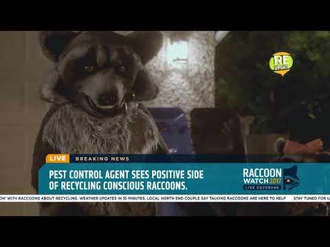 Raccoon Watch 2017 - Pest Control Agent Dave talks 'Raccoon Revolution'