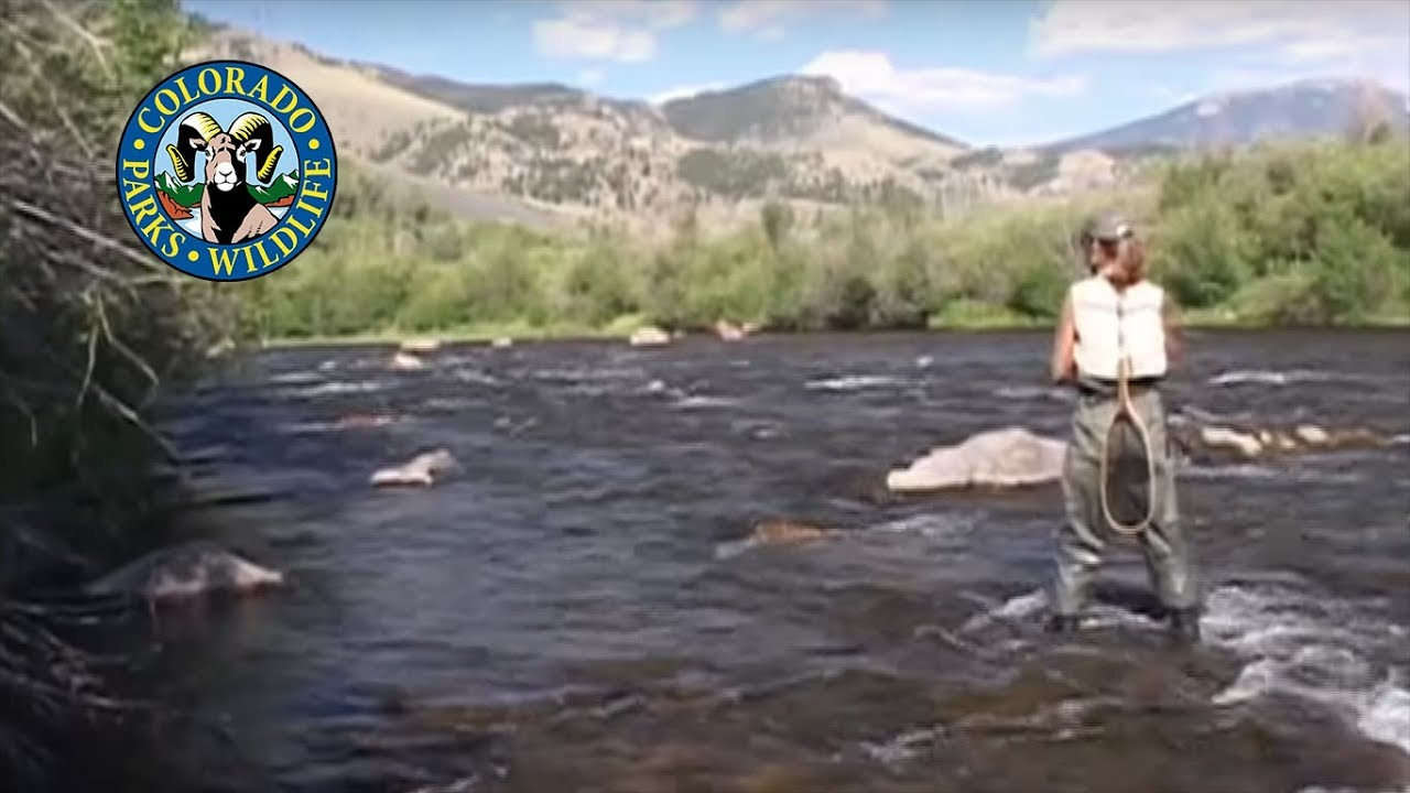 Fly fishing colorado july rio grande cutthroats youtube for Rio fly fishing
