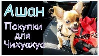 Ашан/Покупки для Чихуахуа/ Что надо купить щенку?