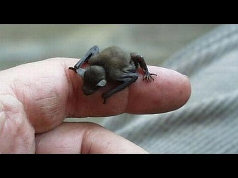 Dünyanın En Küçük ve Sevimli 6 Hayvanı
