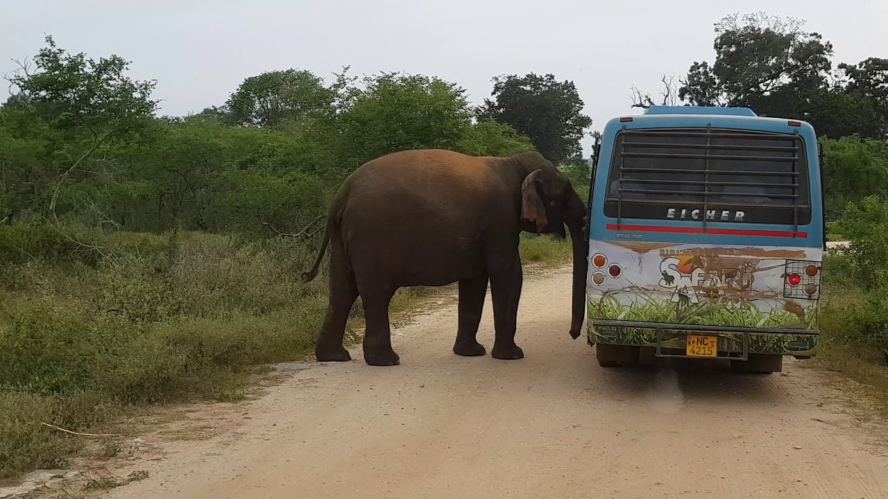 Yala Adventure Safari, Hambantota | DestiMap | Destinations On Map