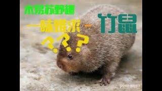 Gambar cover 【木易苏(Muyisu)野趣】一味难求 — 竹鼠