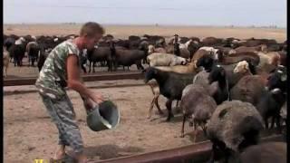 Стратегия животноводства.(, 2012-02-18T18:16:03.000Z)
