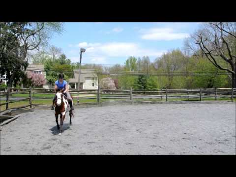 Delaware Valley College Riding Video