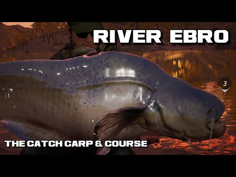 The Catch Carp & Course | River Ebro How To Catch Your First Wels Catfish