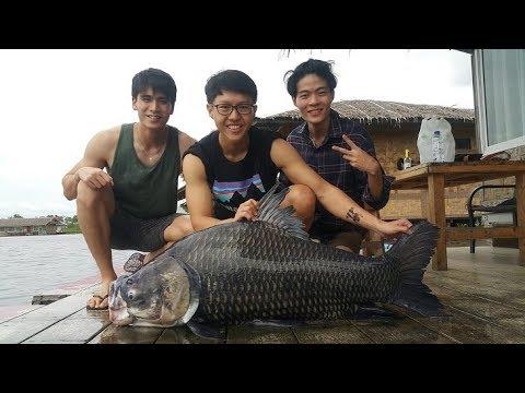 Mekong Catfish & Siamese Carp Bungsamrun Fishing Thailand- BKKGUY