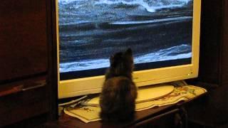 """кот смотрит программу """"Зеленая планета"""""""