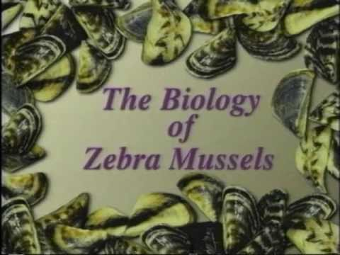 The Biology of Zebra Mussels