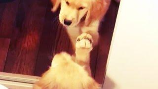 Pets VS Mirrors (New Video) (HD) [Funny Pets]