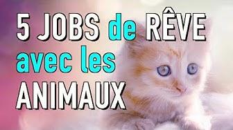 5 JOBS DE RÊVE POUR TRAVAILLER AVEC LES ANIMAUX