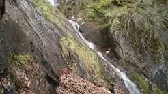 Ours Pyrénées vidéo.Ours rencontré dans le Couserans en vallée d'Orle.
