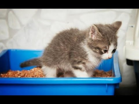 10 мар 2016. В этом видео показано какие вещи нужно купить кошке в первую очередь. Ссылка на это видео: https://youtu. Be/x86w66ang2u.